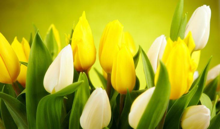 Весь март дарим женщинам подарки!